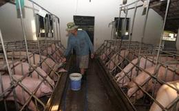 Nông nghiệp dễ bị tổn thương khi hội nhập