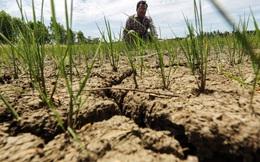 Chẳng vui gì khi xuất khẩu gạo top thế giới, Thái Lan đang muốn giảm sản lượng lúa càng nhiều càng tốt