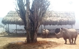 Phát hiện chấn động ở Long An: Nuôi nhốt tê giác, cọp như gà vịt