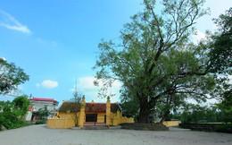 Ngôi làng 500 tuổi ở Hà Nội