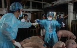 Trộn chất cấm vào thức ăn chăn nuôi: Sẽ bị 20 năm tù, phạt 1 tỉ đồng