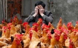 """Mỹ kiện Trung Quốc: Tất cả chỉ vì """"con gà"""""""