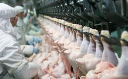 """Tại Mỹ: Công nhân chế biến thịt gia cầm phải """"đóng bỉm"""" trong lúc làm việc"""