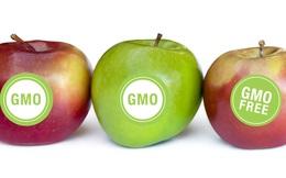 Thực phẩm biến đổi gen liệu có an toàn?