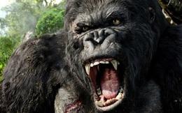 Cơ hội 'làm ăn' từ 'Kong: Skull Island'