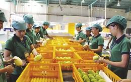 Hàn Quốc chuộng hoa quả của Việt Nam