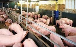 Bộ Nông nghiệp tố Salbutamol thất thoát sang ngành chăn nuôi là do bộ Y tế?