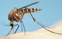 Cảnh giác khi bệnh sốt vàng đang gia tăng