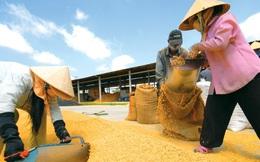 Thái Lan xả kho gạo dự trữ sẽ ảnh hưởng lớn tới XK gạo của Việt Nam