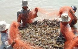 """Nghèo, thuần nông, nhưng tỉnh này kiên quyết nói """"không"""" với dự án công nghiệp, chọn cá tôm!"""