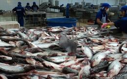 Ngành tôm và cá tra: Lớn mà yếu