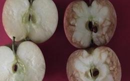 Câu chuyện 2 trái táo và bài học về sự tổn thương