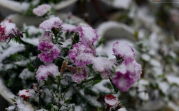 Chùm ảnh: Ngắm nhìn thị trấn Sapa chìm trong tuyết trắng