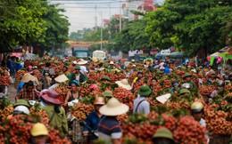 Vải thiều Bắc Giang nhuộm đỏ quốc lộ 31