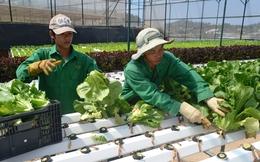 Lâm Đồng: Gần 100% mẫu nông sản được phân tích cho kết quả an toàn