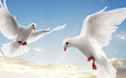 """Có một Đà Nẵng """"đất lành nhưng chim không đậu"""""""