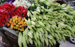 Hương hoa loa kèn trên phố Hà Nội