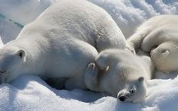 Nền nhiệt độ Bắc Cực đang ấm hơn 20 độ C so với trung bình