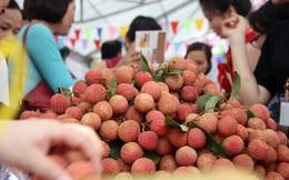 Đặc sản vải thiều đã hết mùa từ 5 tháng trước, Lục Ngạn - Bắc Giang mới mở Ngày hội trái cây