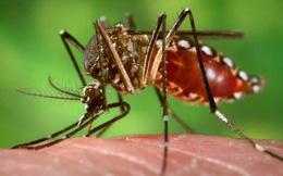1 trong 2 người nhiễm virus Zika tại Việt Nam hiện đang mang thai
