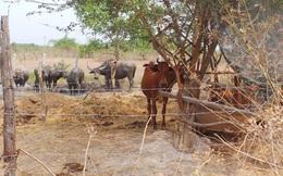 Thanh tra toàn diện dự án Thảo cầm viên Sài Gòn Safari