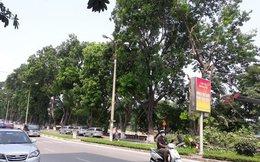 Hà Nội chặt, chuyển hơn 100 cây xanh phố Kim Mã