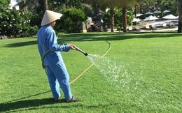 Mảnh ruộng trồng cỏ nhà giàu: Mỗi năm 500 triệu