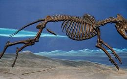 Phát hiện bằng chứng cho thấy đàn ông từng có xương ở... chỗ đó nhưng vì chung thủy nên nay không còn