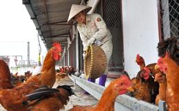 """Cho nhập khẩu gà Trung Quốc: """"Chỉ là trao đổi sơ bộ"""""""