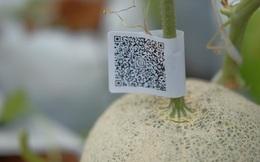 Kể từ nay, người Việt có thể biết nông sản sạch hay bẩn nhờ truy xuất nguồn gốc qua smartphone