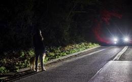 Đèn pha xe máy hay ô tô của bạn luôn có 2 chế độ và bạn có thể bị phạt nặng nếu không biết dùng đúng lúc