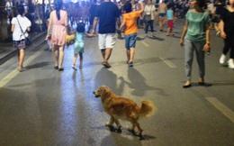 Phố đi bộ Hà Nội: Sự xâm lăng của loài chó