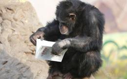Đến tinh tinh còn ham đọc sách thế này thì chúng ta chẳng có lý do gì để lười học cả!