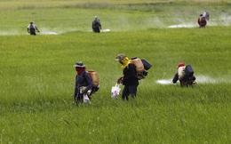 Lao theo cơn sốt gạo, doanh nghiệp này sắp nhường mảng thuốc bảo vệ thực vật béo bở cho kẻ khác