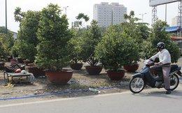 Trúng mùa mai, người Sài Gòn ăn tết năm nay rực rỡ