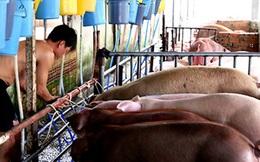 Không dễ bỏ tù người bán thịt chứa chất cấm
