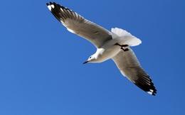 Từ thú chơi cho giới nhà giàu, thủy phi cơ Hải Âu thành con chim gẫy cánh