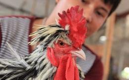 Bộ Nông nghiệp đặt mục tiêu năm 2017, thịt gà Việt Nam có thể xuất khẩu sang Nhật Bản