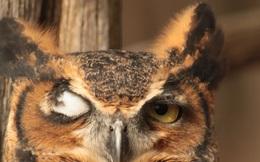 Cuộc sống sẽ thế nào nếu bạn chỉ được nhìn đời bằng một con mắt?