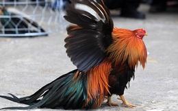 Phó Thủ tướng Vương Đình Huệ: Nông sản Việt có gà đi bộ, bưởi da xanh đâu sợ cạnh tranh