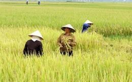 Trồng lúa nghèo nhất