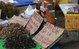 Cẩn trọng với thảo dược bán dạo