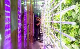 Được đầu tư tới 4,3 triệu USD nhờ ý tưởng trồng rau trong container