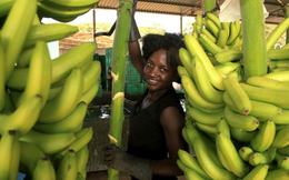 Angola: Dầu giảm, kim cương bị chê, quay ra bán chuối