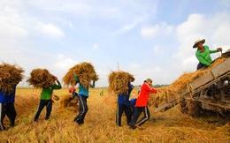 Thực phẩm Sài Gòn đội giá vì miền Tây hạn mặn