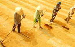 Quý I, người Indonesia mua lượng gạo Việt cao gấp 213 lần năm ngoái, đáng mừng hay đáng lo?