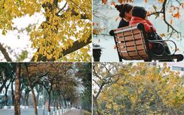 Ai nói Hà Nội không có mùa lá vàng, lá đỏ?