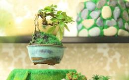 """Chàng trai Sài Gòn kiếm hàng trăm triệu doanh thu mỗi tháng từ nghề """"độc"""": Trồng bonsai bay lơ lửng nhờ... nam châm"""