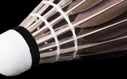 Bạn có biết: quả cầu lông là một trong những tạo vật tinh tế nhất trên đời