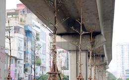 """Lãnh đạo Cty cây xanh Hà Nội nói gì về việc """"trồng cây dưới gầm cầu""""?"""